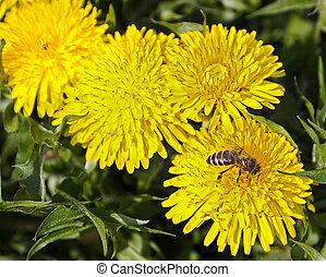 bee nectar flower yellow