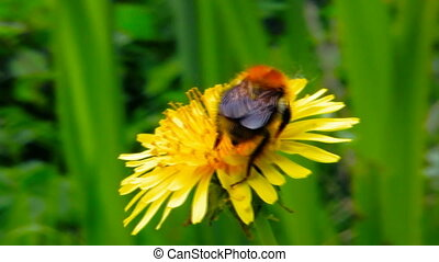 Bee On A Flower 1