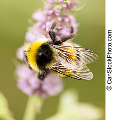 bee on a flower in nature