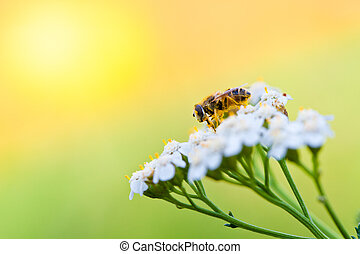 Bee on a flower in spring day