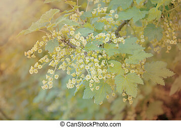 bee on a flower of red currants