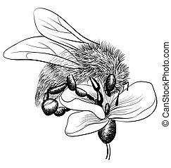 bee on a flower on white background. vector monochrome illustration
