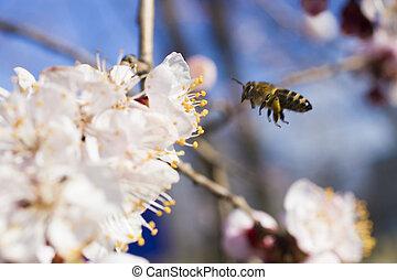 Bee on a fruit tree