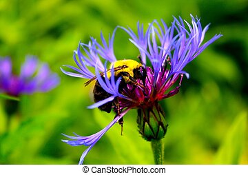 Bee on a purple flower