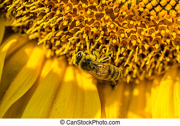 bee on a sunflower detail