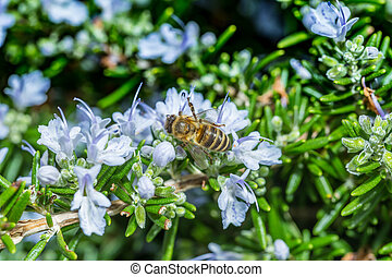 Bee on blue flowers background