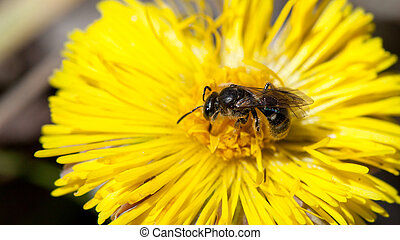 Bee sitting on a yellow flower, close-up