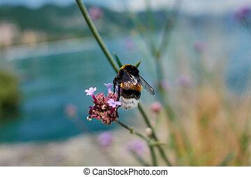 bee on flower in the garden
