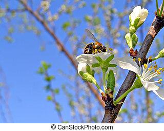 bee on flowerses plum