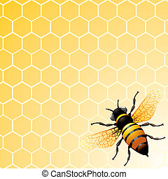 Bee on honeycomb. Background for you design.