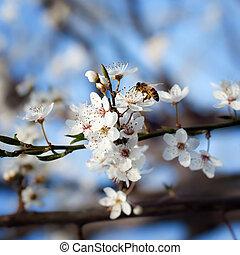 bee on plum flower