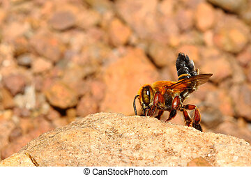Bee on rock in forest