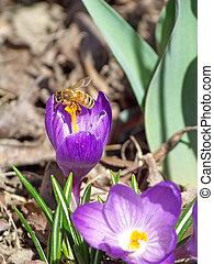 Bee on stamen