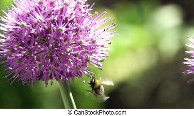 Bee on the flower, close up.