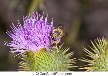 bee on the flower collects pollen