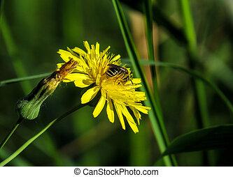 Bee on yellow flower in Spain