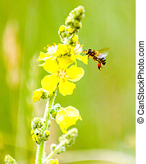bee on yellow flower of a wild plant