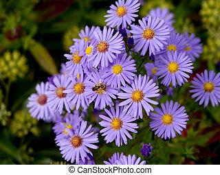 bee., parterre fleurs