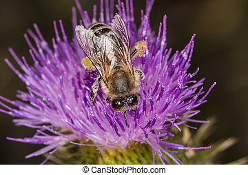 bee seating on the flower