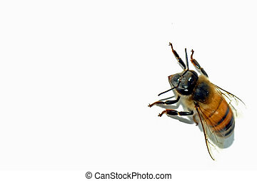 Bee Stock - A bee in the wall