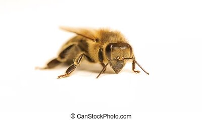 Bee suffering and being weak - Bee macro being weak and...