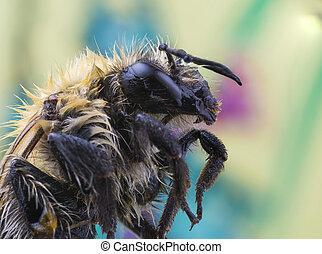 Bee super macro