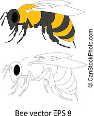 bee vector - illustration of a honey bee
