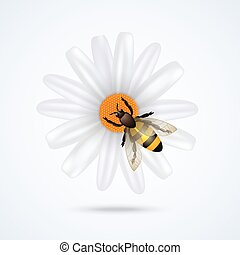 Realistic honey bee on daisy flower isolated on white background vector illustration