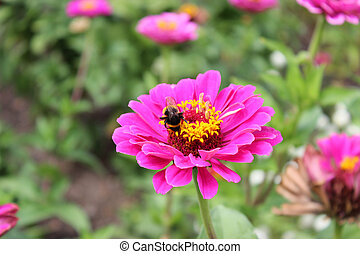 Bee with flower