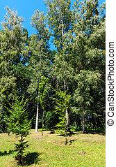 Beech and birch trees in summer green grassy park
