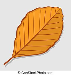 Beech autumn leaf. Flat design Vector illustration