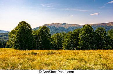 beech forest at the foot of Apetska mountain. lovely summer...