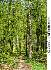 Beech forest in green colors