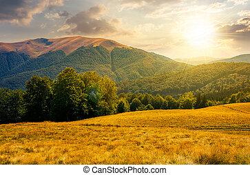 beech forest near Apetska mountain at sunset. lovely summer...