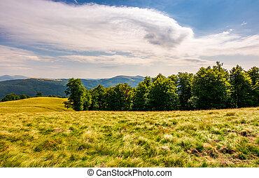 beech forest on grassy hillside. lovely scenery of...