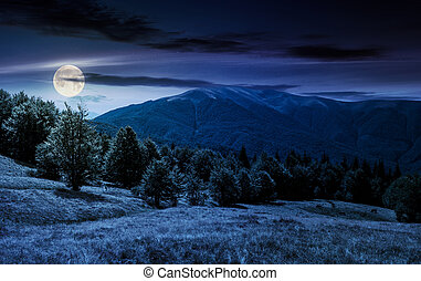 forest on grassy meadows in mountains at night - beech...