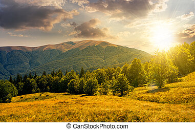 forest on grassy meadows in mountains at sunset