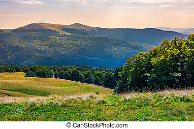 beech forests of Carpathian mountains. gorgeous landscape of...