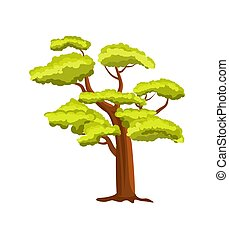 Beech green tree vector icon