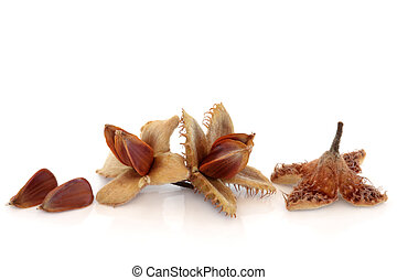 Beech Nuts - Beech nuts, isolated over white background with...
