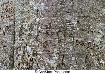 Beech tree graffiti