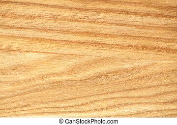 Beech tree texture - Texture of beech tree close-up. Natural...
