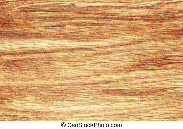 Beech tree texture - Texture of beech tree texture close-up....