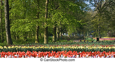 Beech trees and spring flowers