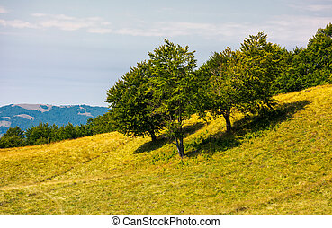 beech trees on a grassy hill. lovely scenery with distant...