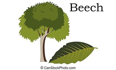 Beech Trees vector element. vector green