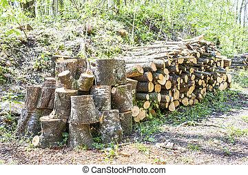 Beech wood pile of firewood.