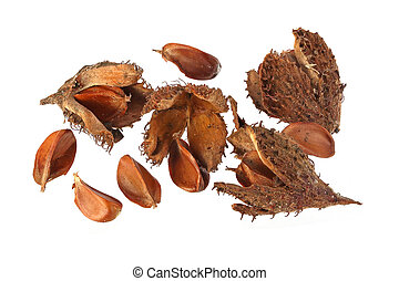 Beechnuts and husks on a plain white background.