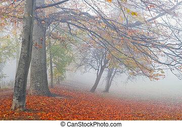 Beechtrees in dense fog