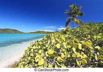 Beef Island Beach - Virgin Islands